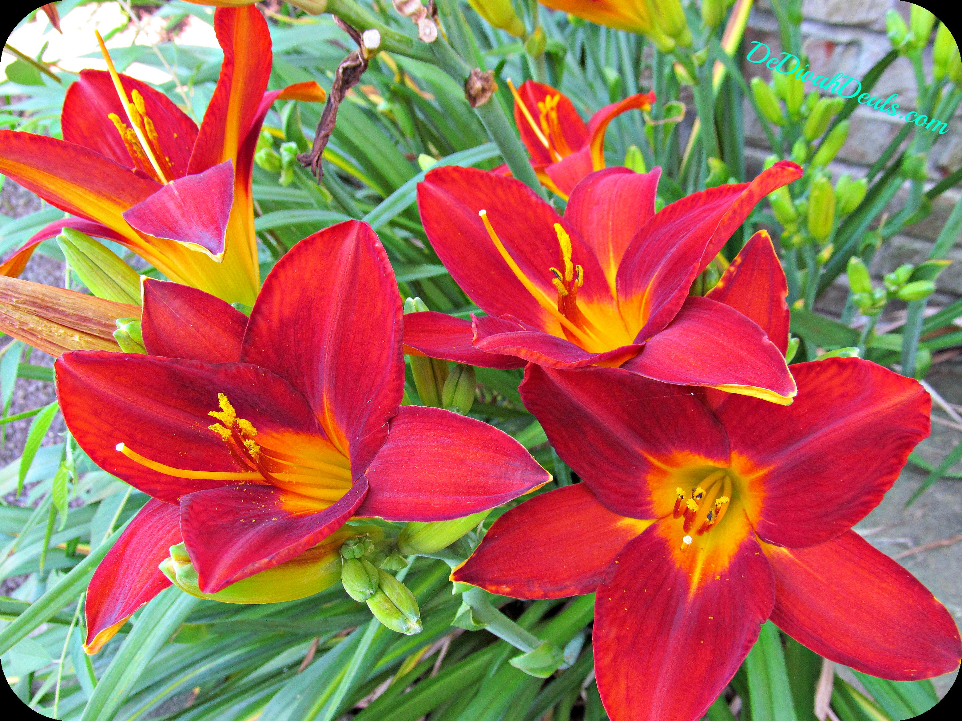 Lily dedivahdeals lily july 7 2013 izmirmasajfo