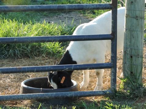 Cowgirl's Creamery 004